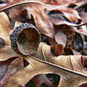 Autumn Acorn And Oak Leaves Art Print by Jennie Marie Schell