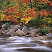 Autumn Along Swift River  Art Print