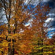 Autumn At Mc Cauley Mountain Art Print