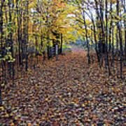 Autumn At Mono Cliffs Art Print