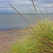 Autumn Beach Grasses Art Print