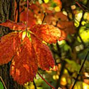 Autumn Begins 2 Art Print