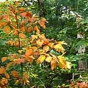 Autumn Begins At Breakheart Reservation Art Print