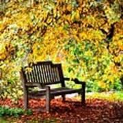 Autumn Bench In The Garden  Art Print