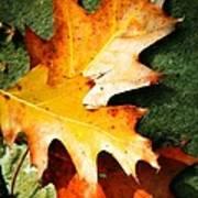 Autumn Blaze Print by JAMART Photography