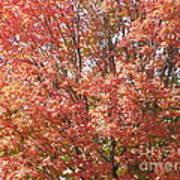 Autumn Blaze Art Print by Kevin Croitz