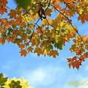 Autumn Blues Art Print