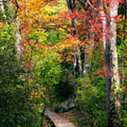 Autumn Boardwalk Art Print by Bill Wakeley