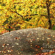 Autumn Boulder And Leaves Art Print