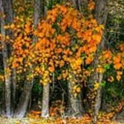 Autumn Breakout No.2 Art Print