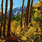 Autumn Brilliance 2 Art Print