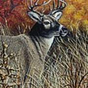 Autumn Buck Art Print