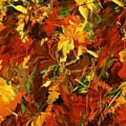 Autumn Burst Art Print