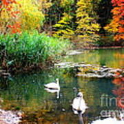 Autumn By The Swan Lake Art Print