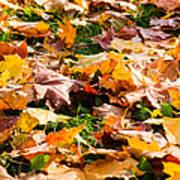 Autumn Carpet Art Print