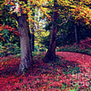 Autumn Carpet In The Enchanted Wood Art Print