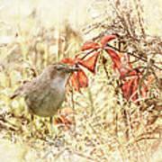 Autumn Catbird Art Print