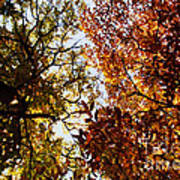 Autumn Chestnut Canopy   Art Print