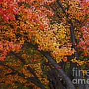 Autumn Color Art Print