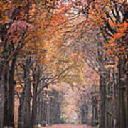 Autumn - Colorful Red Green Orange Nature Landscape Fine Art Photography Art Print by Artecco Fine Art Photography