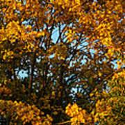Autumn Colors 11 Art Print