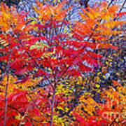 Autumn Colors - 113 Art Print