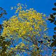 Autumn Colors Against The Sky Art Print