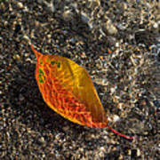 Autumn Colors And Playful Sunlight Patterns - Cherry Leaf Art Print