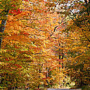 Autumn Colors - Colorful Fall Leaves Wisconsin IIi Art Print