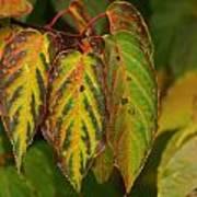 Autumn Colours Art Print by Jacqui Collett