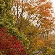 Autumn Comes To The Burbs Art Print