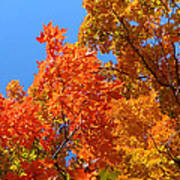 Autumn Contrasts Art Print