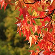 Autumn Cornered Art Print