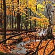 Autumn Creek In The Rain Art Print