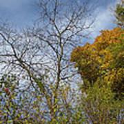 Autumn Ending Art Print