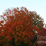 Autumn Eve Art Print