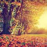 Autumn Fall Landscape In Park Art Print
