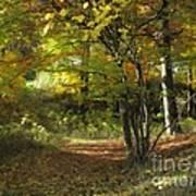Autumn Feeling Art Print