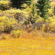 Autumn Fire In The Grass Art Print