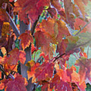 Autumn Flame Art Print by Dana Moyer