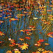 Autumn  Floating Art Print by Peggy Franz