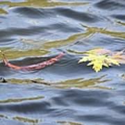 Autumn Floats Away Art Print