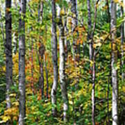 Autumn Forest Detail Art Print