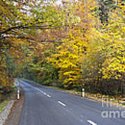 Autumn Forest Road Art Print