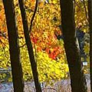 Autumn Forest Scene Art Print
