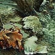 Autumn Frozen In Time Art Print