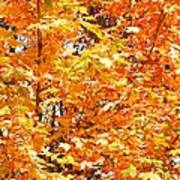 Autumn Fury Art Print