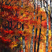 Autumn Glory I Art Print