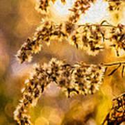 Autumn Goldenrod - Paint  Art Print
