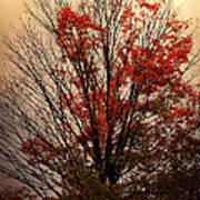 Autumn Goodbyes Art Print